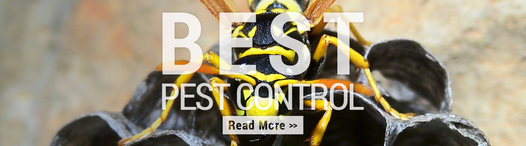 Best Pest Control Myrtle Beach Sc